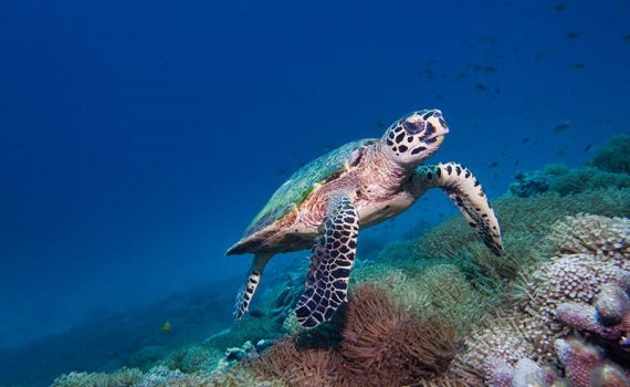Alerta por la pérdida masiva de la biodiversidad del planeta