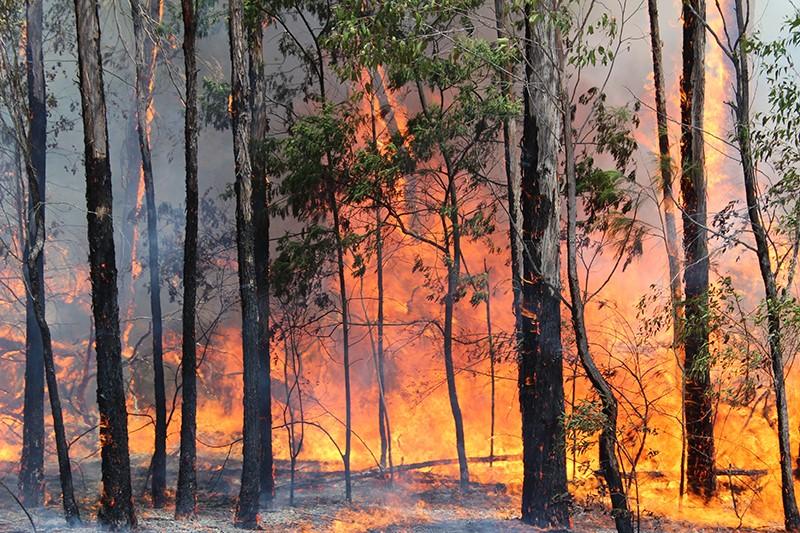 Conferencia Internacional sobre Incendios Forestales recibe propuestas