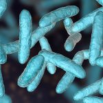 Investigan la influencia de la microbiota intestinal para la salud