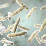 Estudio identifica bacterias intestinales con fibromialgia
