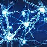 La regeneración neuronal se da hasta la edad adulta mayor