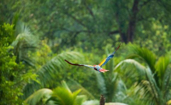 En Honduras, un tesoro arqueológico de especies animales desconocidas