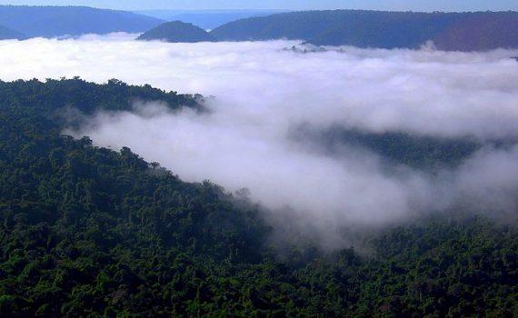 Presión internacional para la preservación ambiental en Brasil