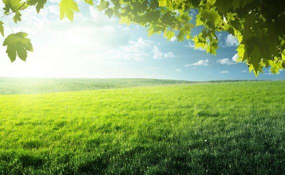 Las praderas comienzan a mostrar los efectos del cambio climático