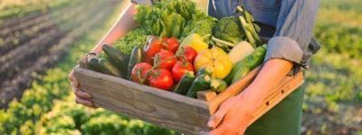 funiblog-sn-nutricion-economia