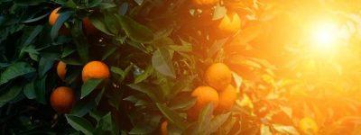 funiber-ma-naranja-bosques