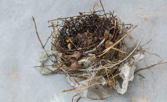 Los pájaros usan la basura para construir nidos