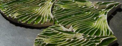 funiblog-ma-alga-purificacion