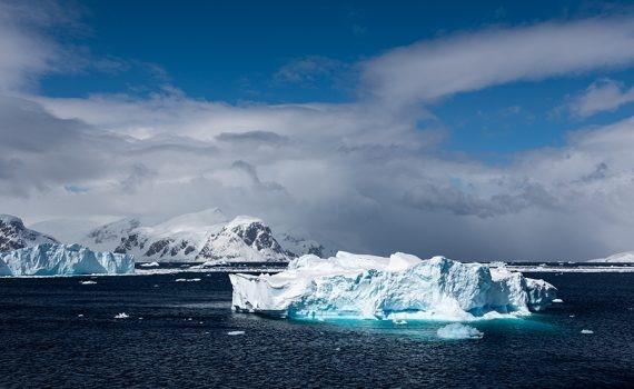 Aumenta la presencia de especies invasoras en la Antártida