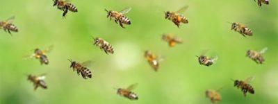 funiblog-ma-abejas