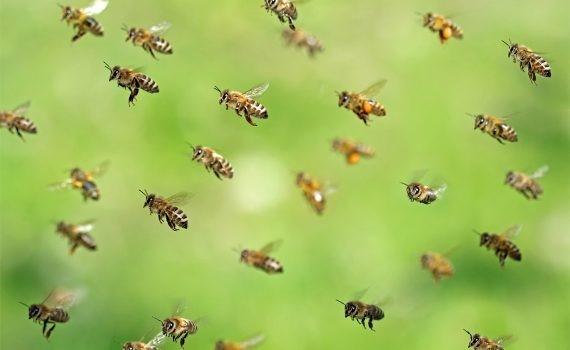 Protección de abejas y colmenas, crucial para el medio ambiente