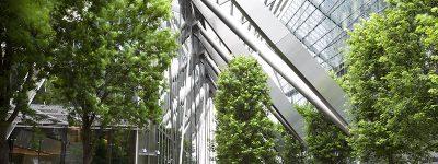funiblog-pro-plantas