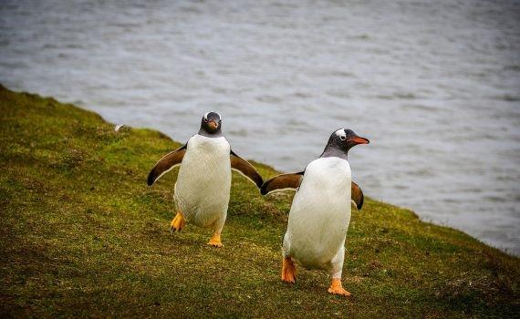 La multiplicación de algas en la Antártida transforma la región