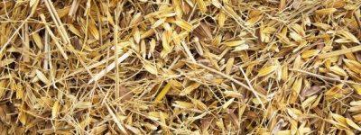 funiblogs-ma-arroz-restos