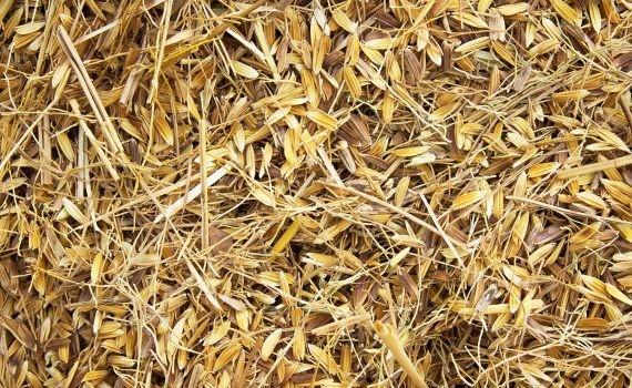 Las cáscaras y los tallos de arroz se convierten en láminas