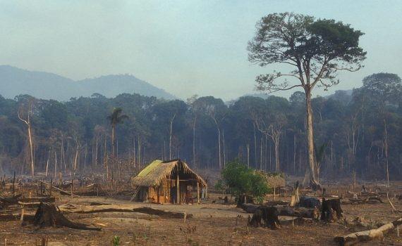Países aprovechan la crisis para retroceder en acciones ambientales