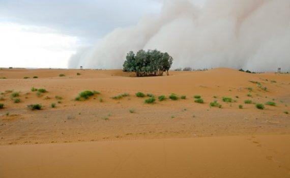 Miles de árboles en el desierto del Sahara