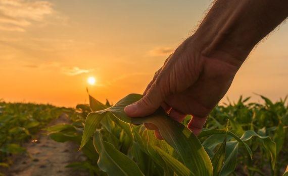Estudio calcula el riesgo de extinción del 40% de las plantas en todo el mundo