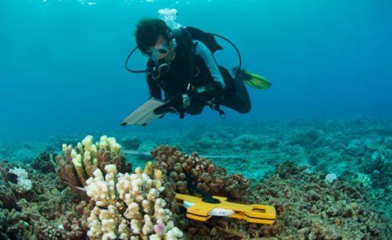 Los arrecifes podrían extinguirse a causa de las emisiones
