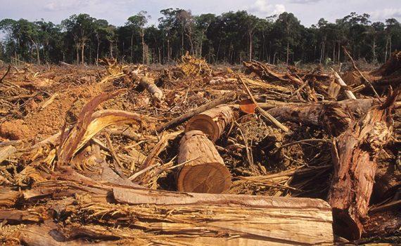 ¿Qué delitos existen sobre el medio ambiente?