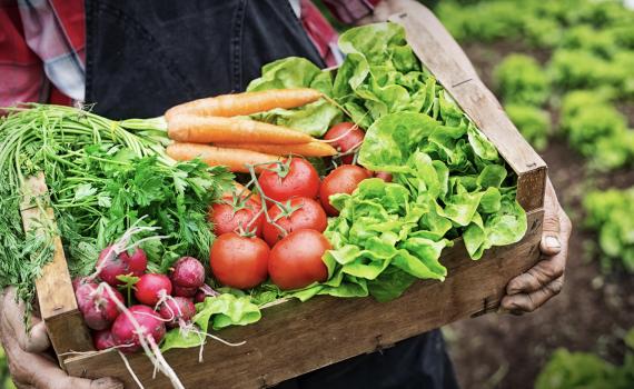 Crear nuevos cultivos para satisfacer las nuevas demandas